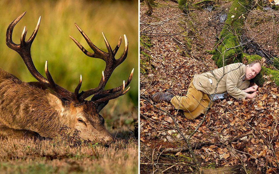 Experiment: Rothirsche sind Fluchttiere: Um ihr Wesen zu spüren, ließ Foster sich von Hunden im Wald jagen