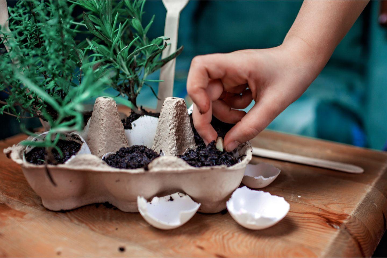 Eierkarton als Kräutergarten