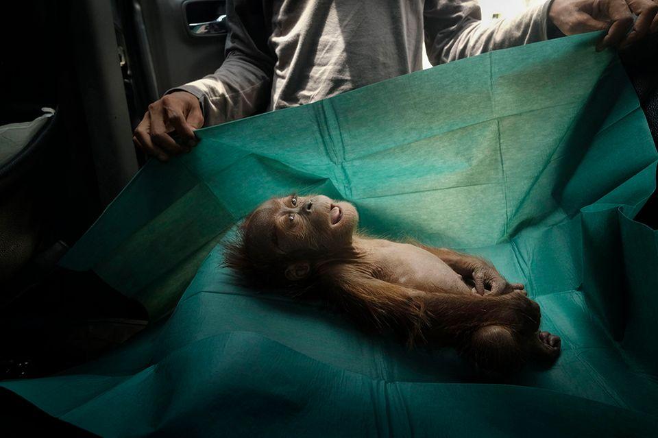 World Press Photo : Pressebilder des Jahres: Das sind die besten Natur- und Umweltfotos - Bild 4