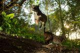 World Press Photo : Pressebilder des Jahres: Das sind die besten Natur- und Umweltfotos - Bild 6