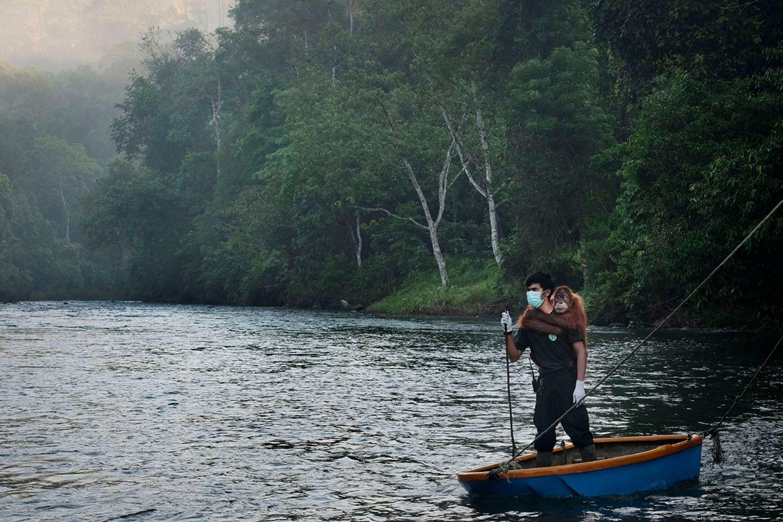 World Press Photo : Pressebilder des Jahres: Das sind die besten Natur- und Umweltfotos - Bild 10