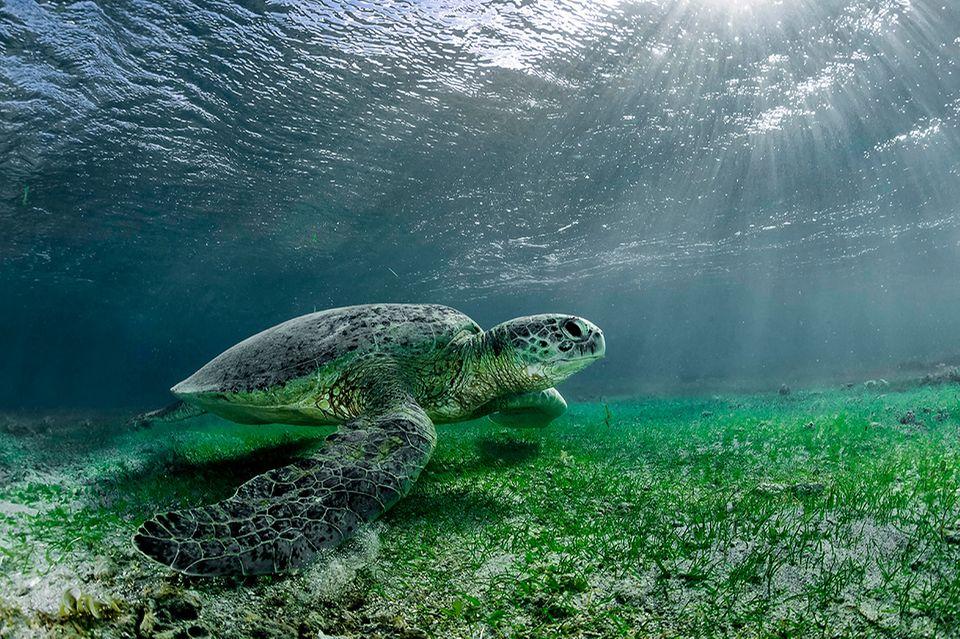 Dank intakter Riffen ist die Unterwasserwelt von Mayotte ein Refugium für Schildkröten, Delfine und Wale