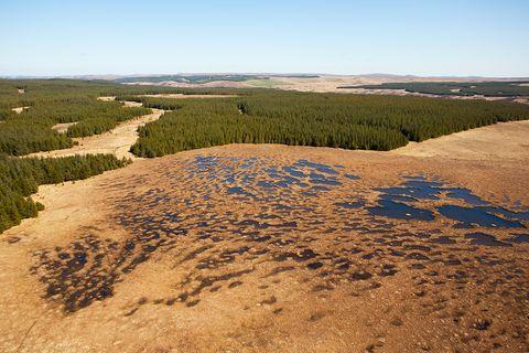 Schottland: Wertvoller Lebensraum: Für 16 Millionen Euro renaturiert Schottland seine Moore