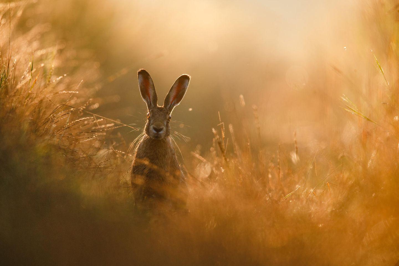 Naturfotograf des Jahres 2020 - die Gewinnerbilder