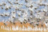 Fotopreis der GdT: Naturfotograf des Jahres: Das sind Gewinnerbilder - Bild 2