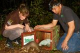 Bedrohte Tierarten: Harte Kerle: Schuppentiere - Bild 8