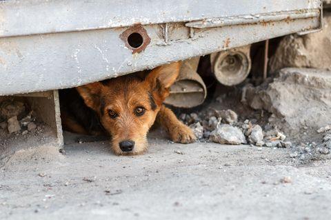 Fotowettbewerb: Macht mit beim Deutschen Tierschutzpreis!
