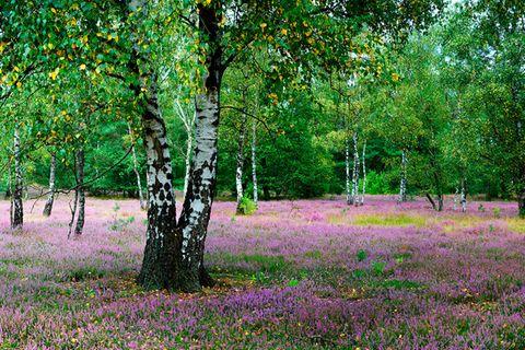 Moosheide: Die Moosheide beherbergt neben klassischen Heideflächen auch die ältesten Dünen im Nordwesten Deutschlands