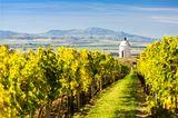 Pálava aus Sicht eines Vineyards in der Nähe von Velke Bilovice