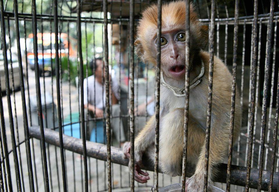 Ein Affe wird einem Käfig auf einem Markt in Jakarta gefangen gehalten