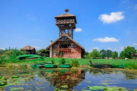 Zasavica: Die Vogelwelt, die in Zasavica ansässig ist, lässt sich am besten von einer der Warten am Ufer aus beobachten