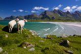 Lofoten: Die wunderschön wilde Inselgruppe im Europäischen Nordmeer - Bild 2