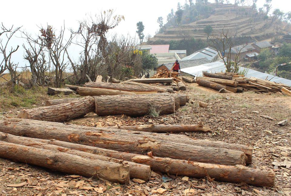 Noch ist der Wiederaufbau der Häuser nach dem Erdbeben nicht abgeschlossen, auch in Danda Basaha ist der Holzbedarf daher groß