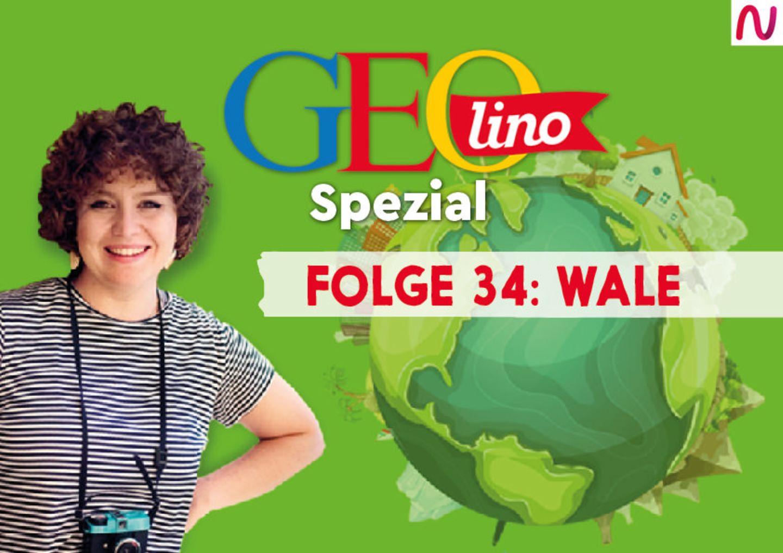 GEOlino Spezial - der Wissenspodcast: Folge 34: Wale