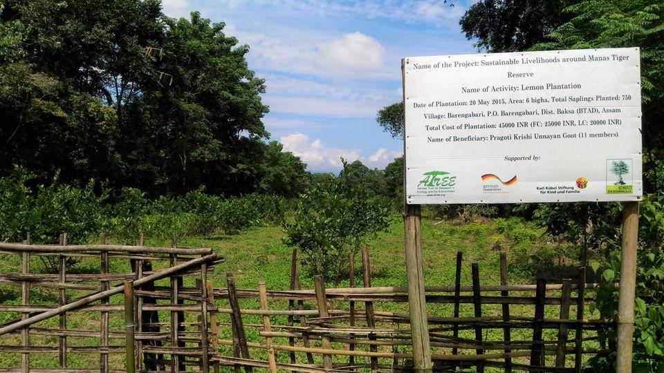 Indien: Zitronenbaum-Kultur beim Projektdorf Barengabari