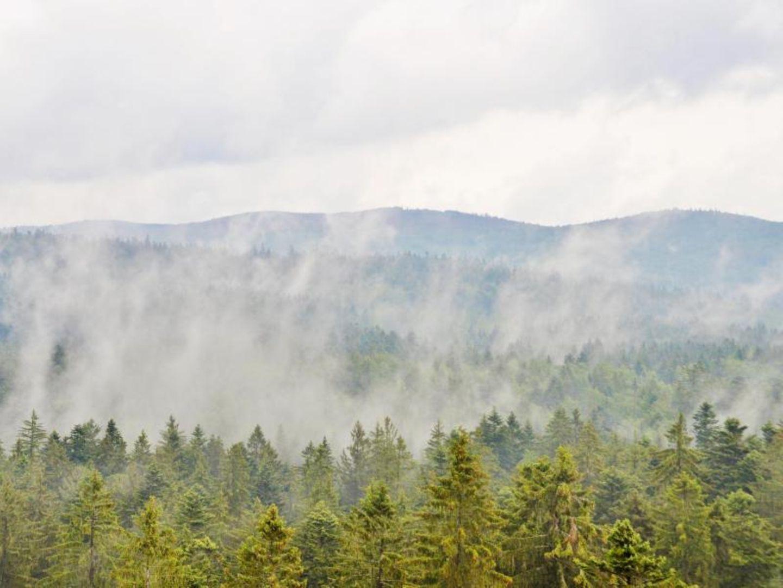 Bayerischer Wald: Grün ist die Landschaft statt karg und bräunlich: Blick über den Bayerischen Wald vom Baumwipfelpfad aus