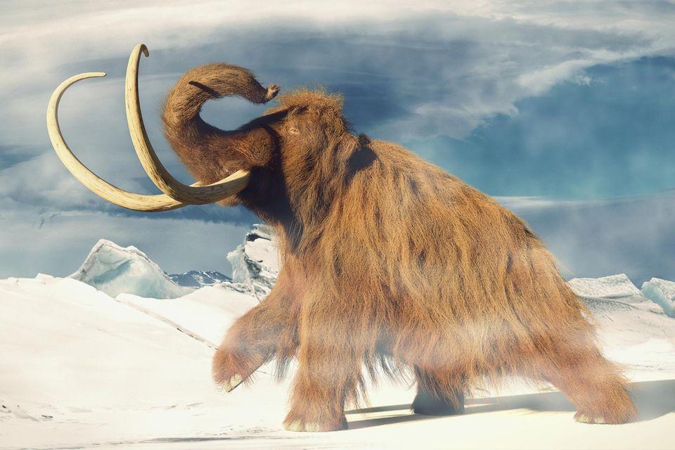 Mammut läuft durch Schneelandschaft