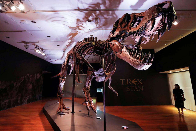 """Spektakuläre Dino-Auktion: Das Dinosaurierskelett """"Stan"""" ist derzeit bei Christie's in New York ausgestellt"""