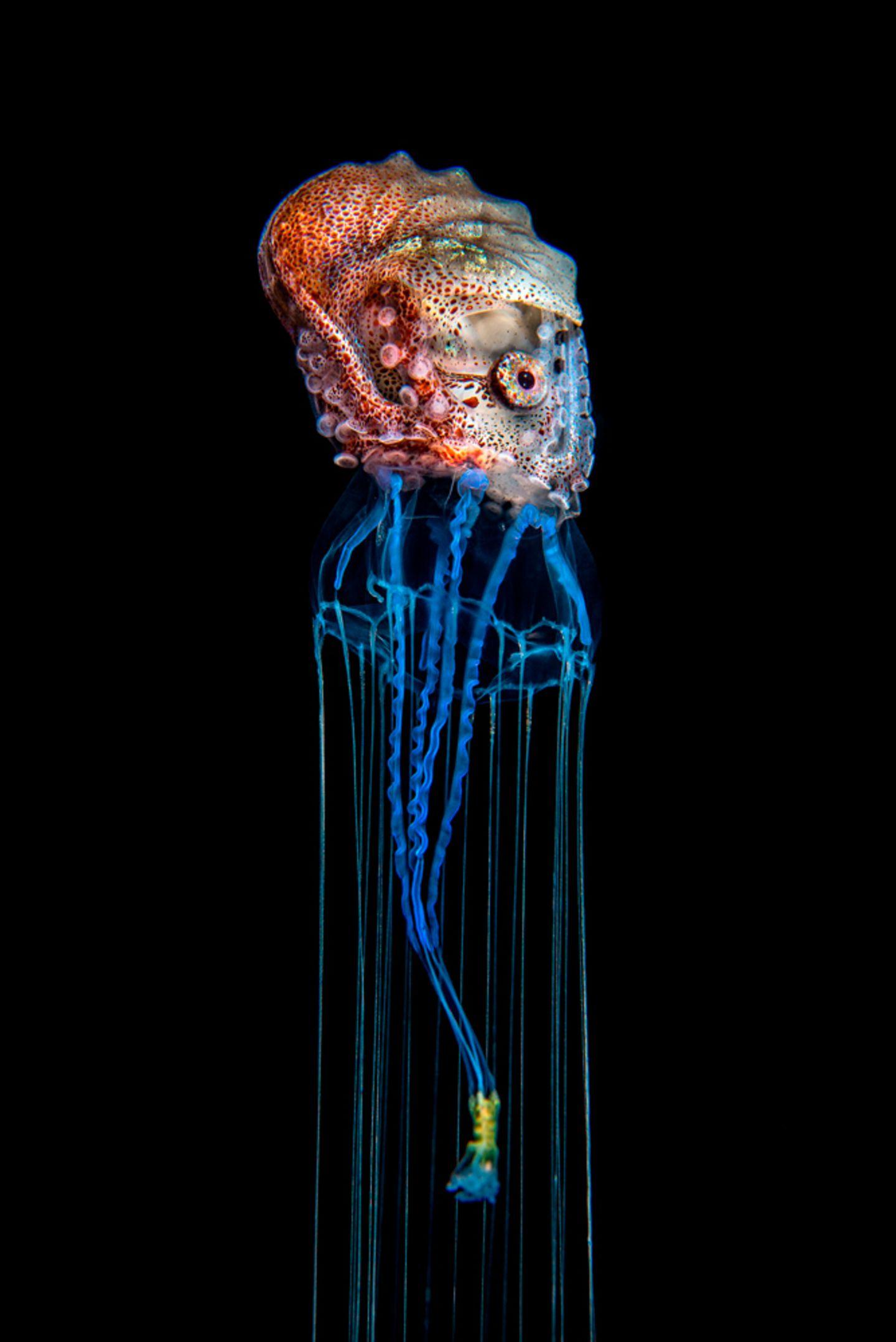 Magnus Lundgren/Nature inFocus Photograph of the Year
