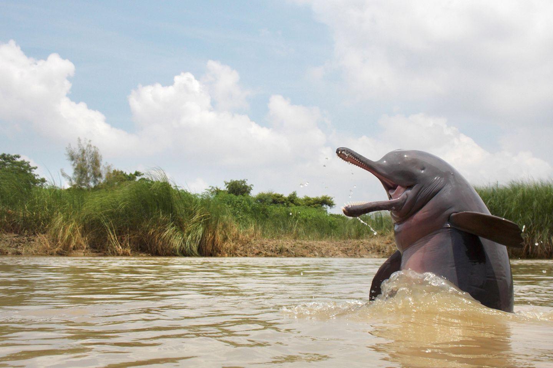 Ganesh Chowdhury/Nature inFocus Photograph of the Year