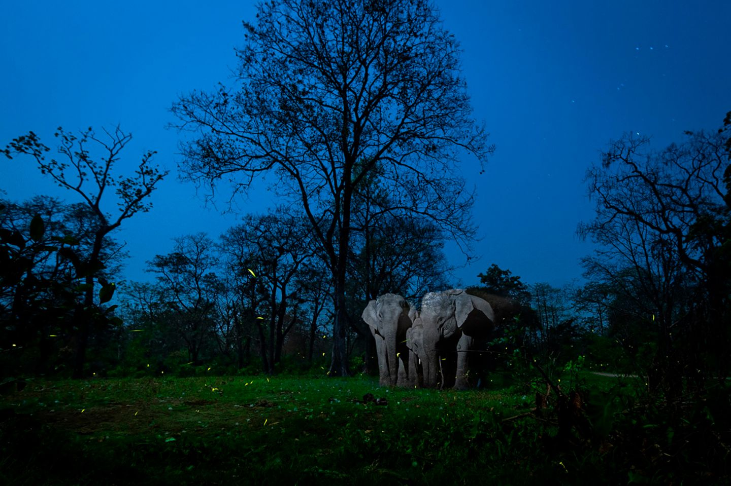 Gagandeep Matharoo/Nature inFocus Photograph of the Year