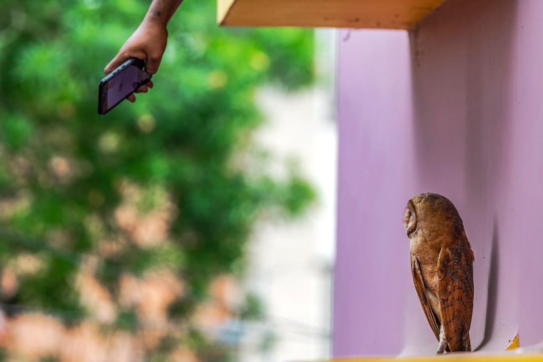 Krishnendu Mitra/Nature inFocus Photograph of the Year