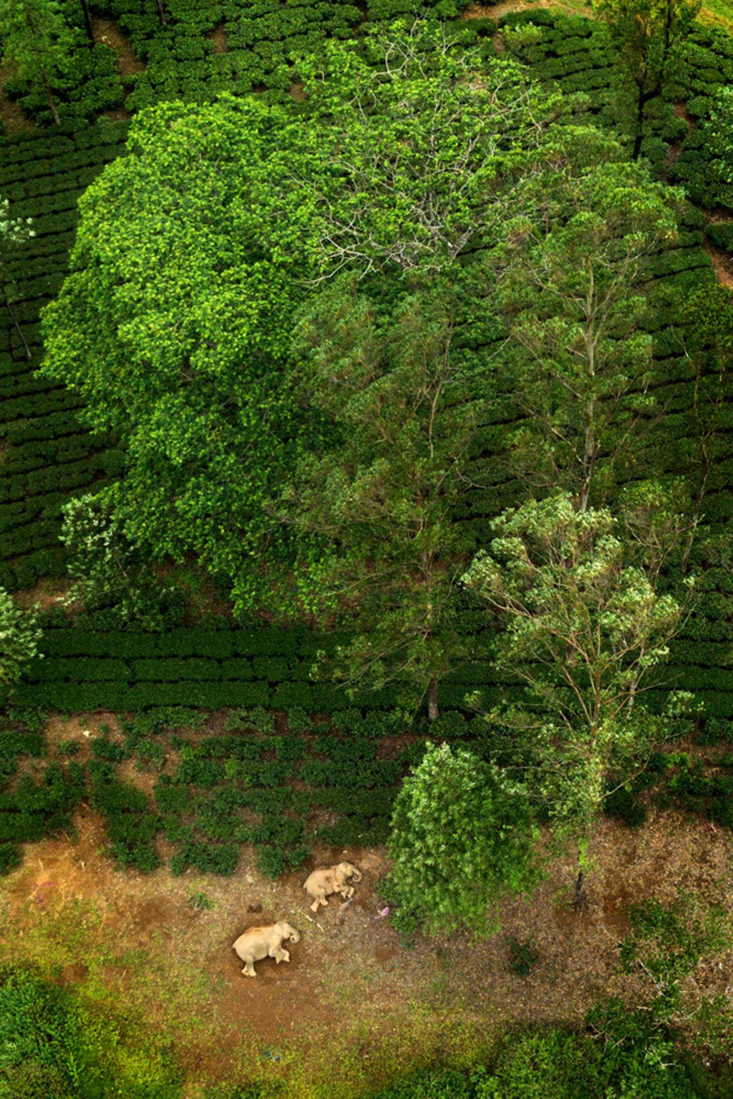 Ganesh Raghunathan/Nature inFocus Photograph of the Year