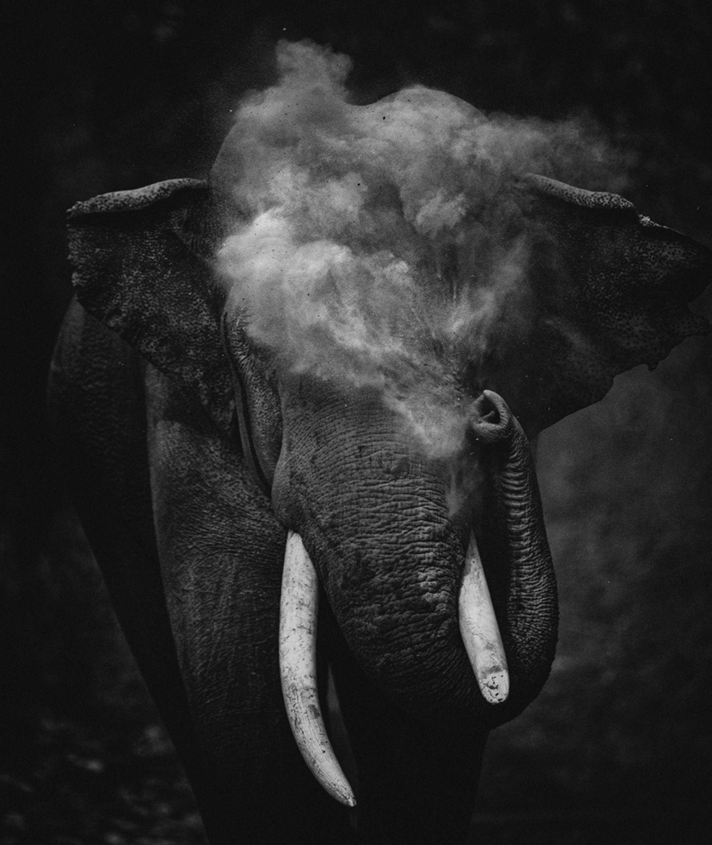 Sitara Karthikeyan/Nature inFocus Photograph of the Year