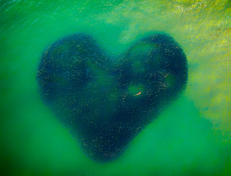 Lachs-Herz