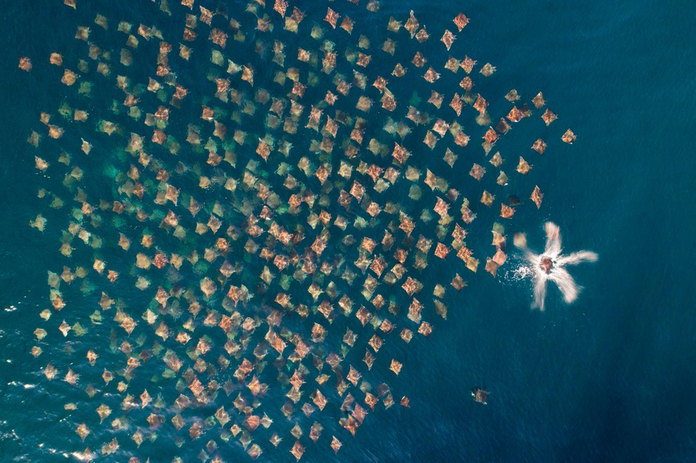 Mark Carwardine/ Drone Photo Awards 2020
