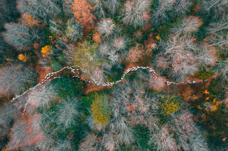 Mehmet Aslan/Drone Photo Awards 2020