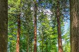 Mammutbäume Traufgang-Felsenmeersteig