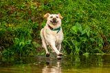 John Carelli/Mars Petcare Comedy Pet Photo Awards 2020