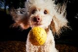 Darren Hall/Mars Petcare Comedy Pet Photo Awards 2020