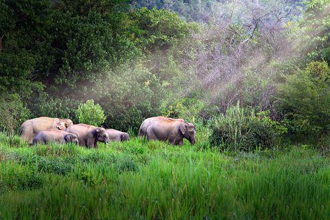 Thailand: In Thailands Nationalparks werden vermehrt wieder wildlebende Elefanten gesichtet, seitdem aufgrund der Corona-Pandemie weniger Touristen im Land unterwegs sind
