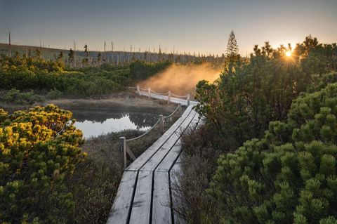 Deutscher Nationalpark: Der Bayerische Wald: wild, vielschichtig und schön - Bild 2
