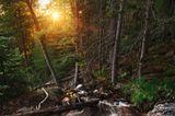 Deutscher Nationalpark: Der Bayerische Wald: wild, vielschichtig und schön - Bild 5