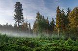 Deutscher Nationalpark: Der Bayerische Wald: wild, vielschichtig und schön - Bild 7