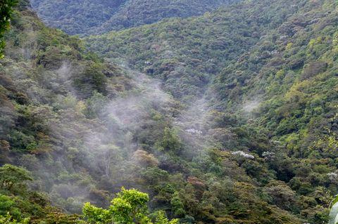Ecuador: Bäume für Brillenbären