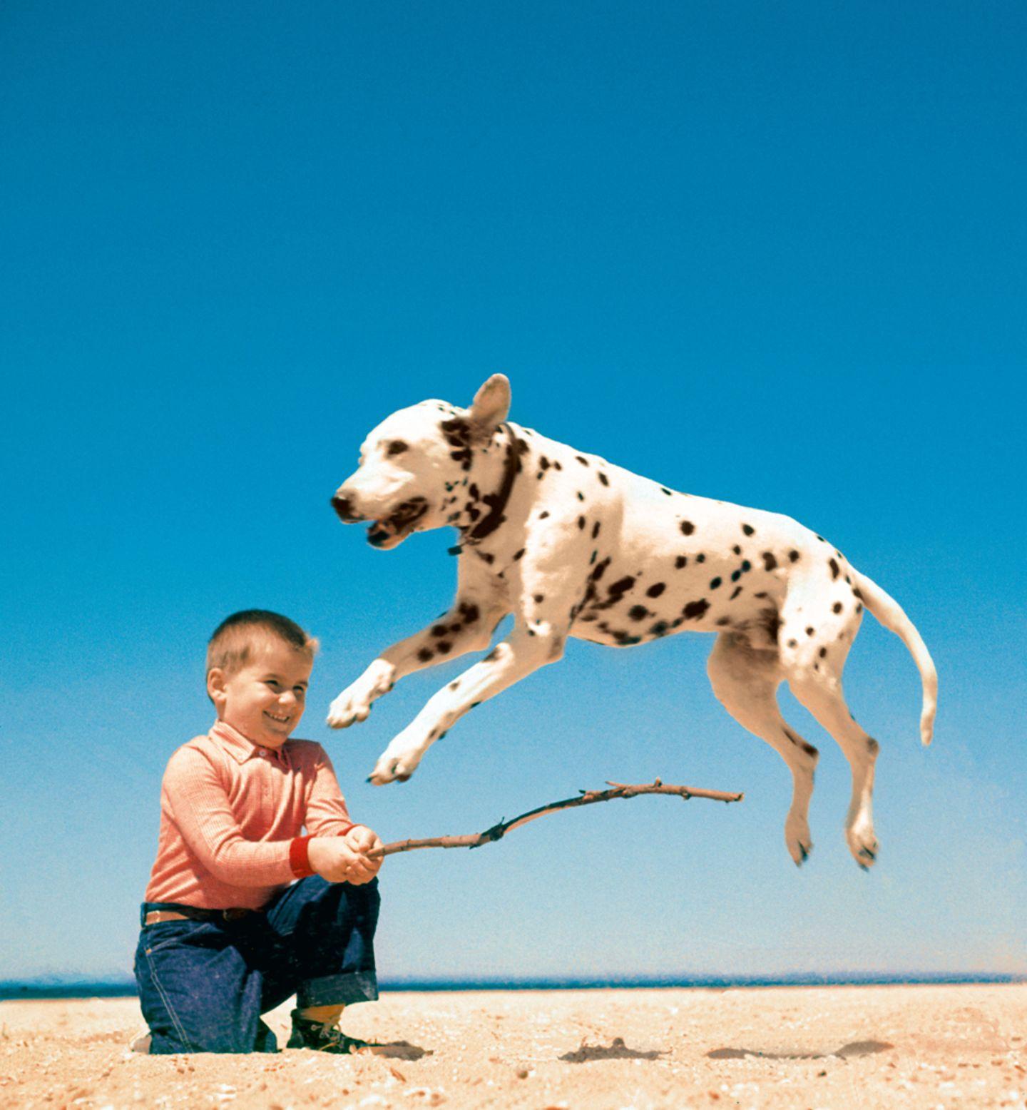 Walter Chandoha: Allem Erfolg zum Trotz blieb Chandoha sich und seinem Stil treu. Er fotografierte die Tiere, die er liebte, mit Menschen, die er liebte – besonders häufig mit seinen sechs Kindern. Wie auf diesem Bild seinen Sohn Enrico mit einem Dalmatiner am Strand von Long Island 1958