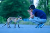 Berlin: Berührendes Fotoprojekt bringt Flüchtlingskinder und Füchse zusammen - Bild 8