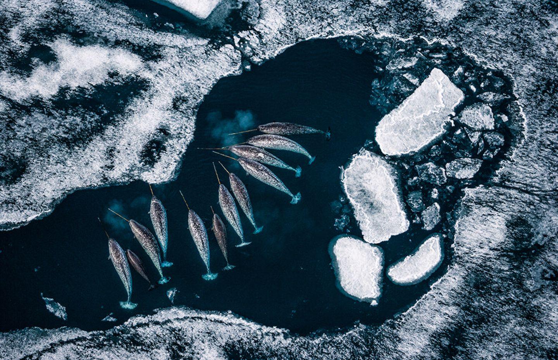 Umweltfotografie: Kraftvolle Bilder über den Zustand unserer Erde - Bild 8