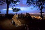 Umweltfotografie: Kraftvolle Bilder über den Zustand unserer Erde - Bild 10