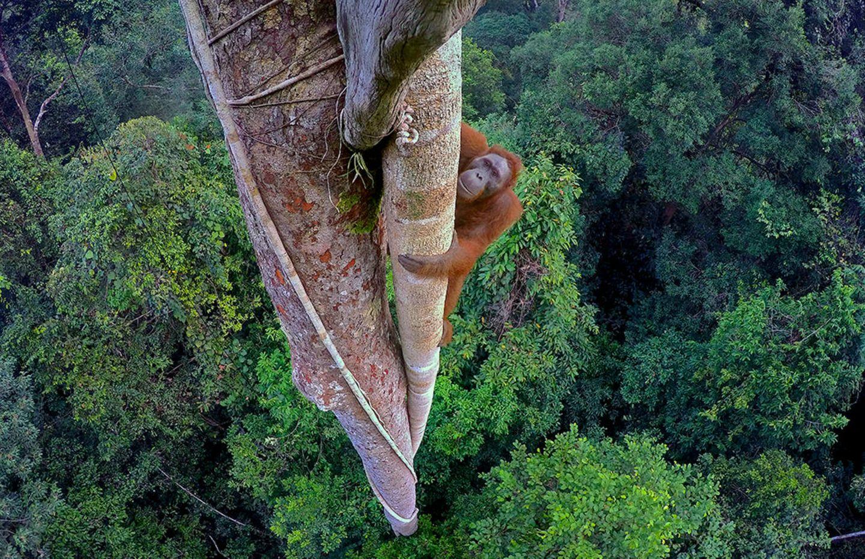 Umweltfotografie: Kraftvolle Bilder über den Zustand unserer Erde - Bild 11