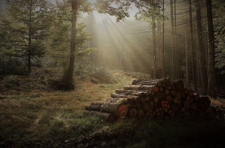 Herbstwanderung im Bayerischen Wald