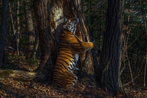 Sergey Gorshkov/ Wildlife Photographer of the Year