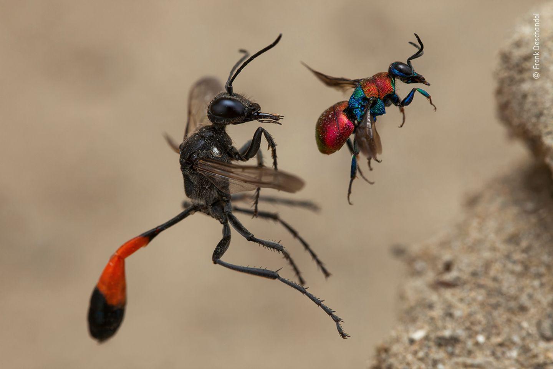 Wildlife Photographer of the Year: Das sind die besten Tierbilder des Jahres - Bild 3