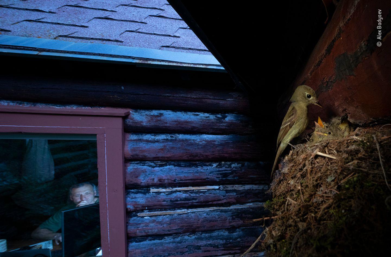 Alex Badyaev/ Wildlife Photographer of the Year