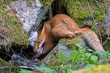 Liina Heikkinen/ Wildlife Photographer of the Year