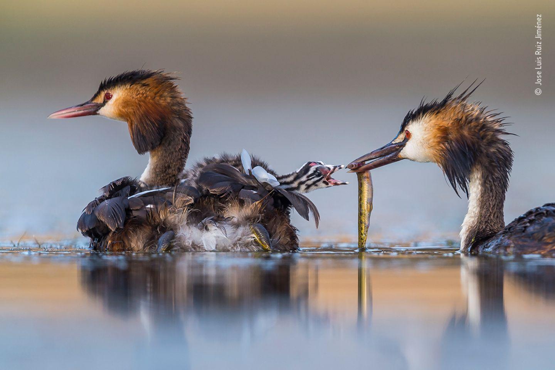 Jose Luis Ruiz Jiménez/ Wildlife Photographer of the Year